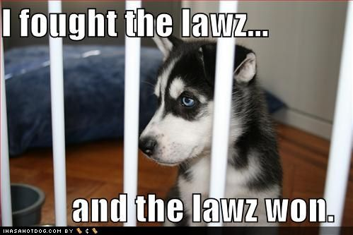 [funny-dog-pictures-dog-fought-the-law-but-the-law-won.jpg]