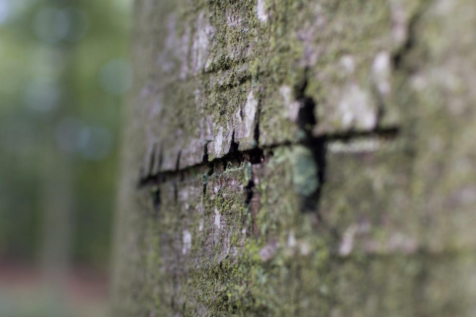 Sergej Aleksandrovič Jesenjin - Page 2 Scar+in+tree_000000968545Large