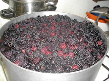 MMMMM..BLACKBERRIES