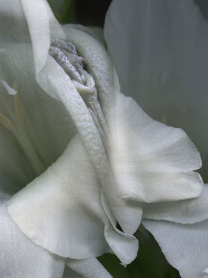 Erotic Vagina Flower I