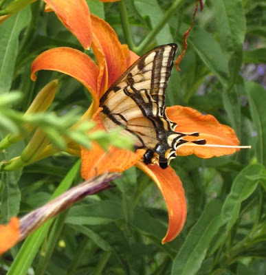 Butterfly, Canyon Road Gallery