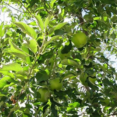 Santa Fe September Apples