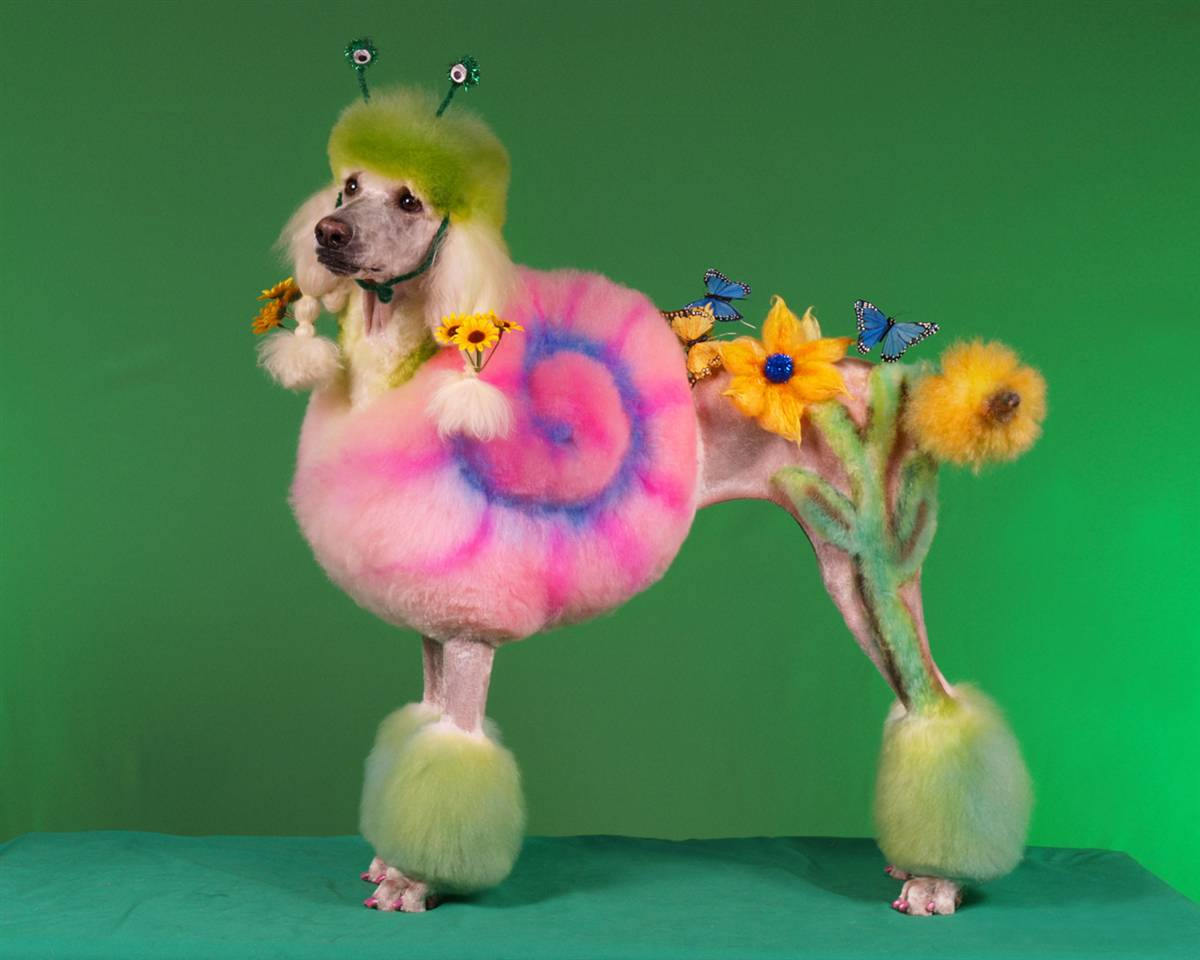 [poodle+painted]