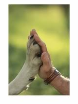 [hand+paw]