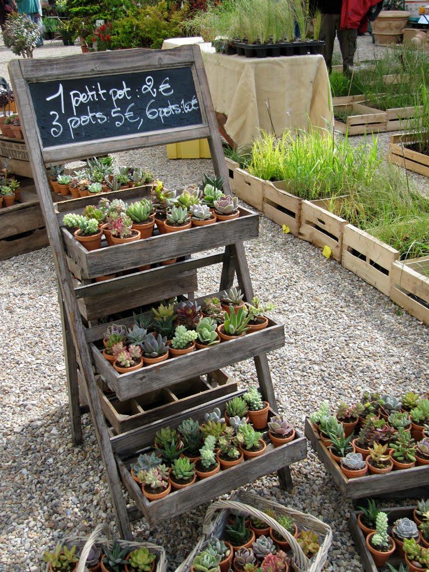Paradis express le jardin des truculentes for Plantes fleuries pour jardin