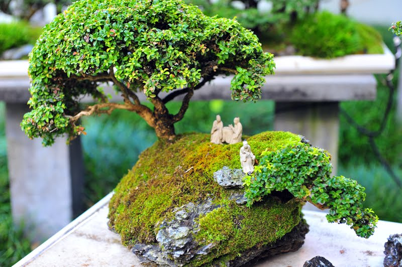 Jardins Miniatures paradis express: jardins miniatures