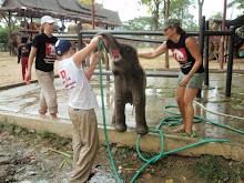 Elephantstay,Thailand