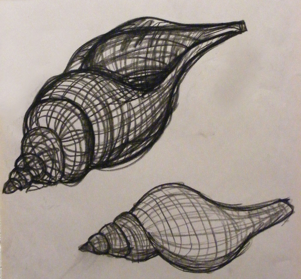 Contour Line Drawing Of Natural Forms : Life drawing one first shell contour