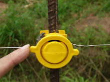 Frog on electric fence insulator