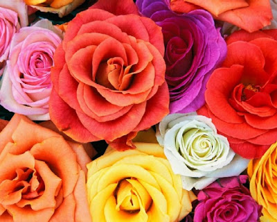 The corey woods blog what does the color of the rose you give say