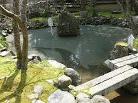 モリアオガエルが棲息している瓢箪池