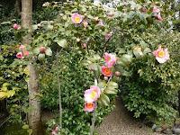 椿が咲く境内