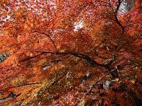 綺麗な紅葉を見て心が和む
