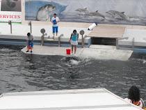 Dolphin Show at Delphinaru