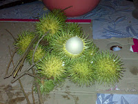 Rambutan, a hairy but deliciously sweet, almost Lychee-like fruit, indegeneous to Southeast Asia