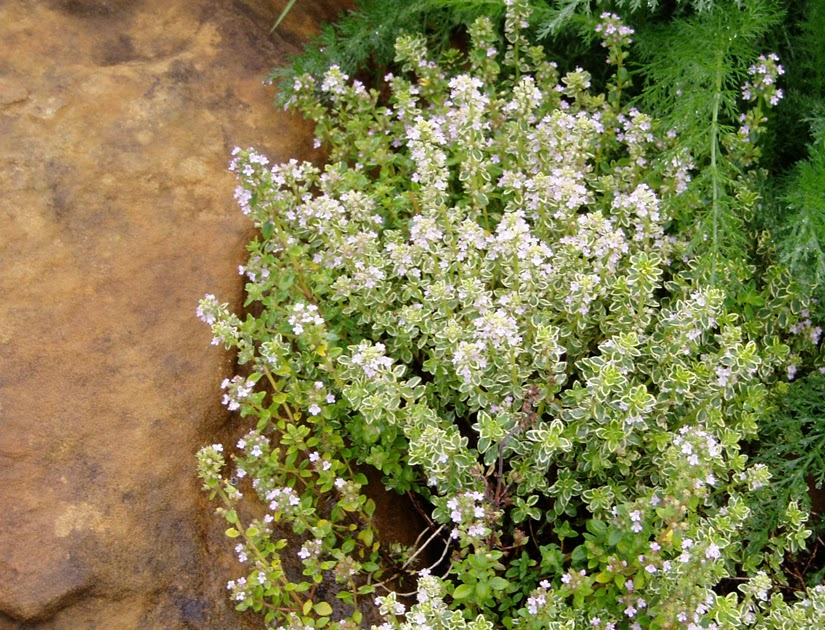 Image Result For Home And Garden Housea