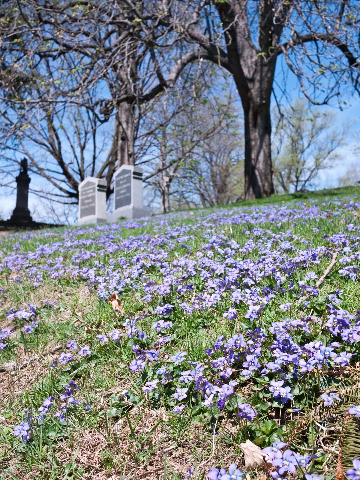 Green Wood Cemetery Trees Weeds