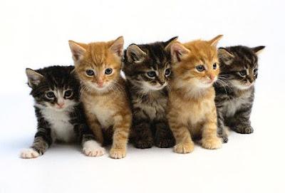 http://3.bp.blogspot.com/_puPnPftfoLI/Sv3IWD8DZxI/AAAAAAAAARE/2EJ6fpMeXhU/s400/kittens.jpg