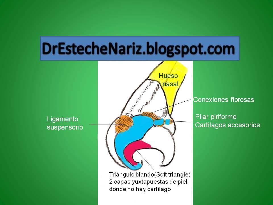 Dr Esteche | Rinoplastia | Cirugía Plástica de Nariz: Rinoplastia ...