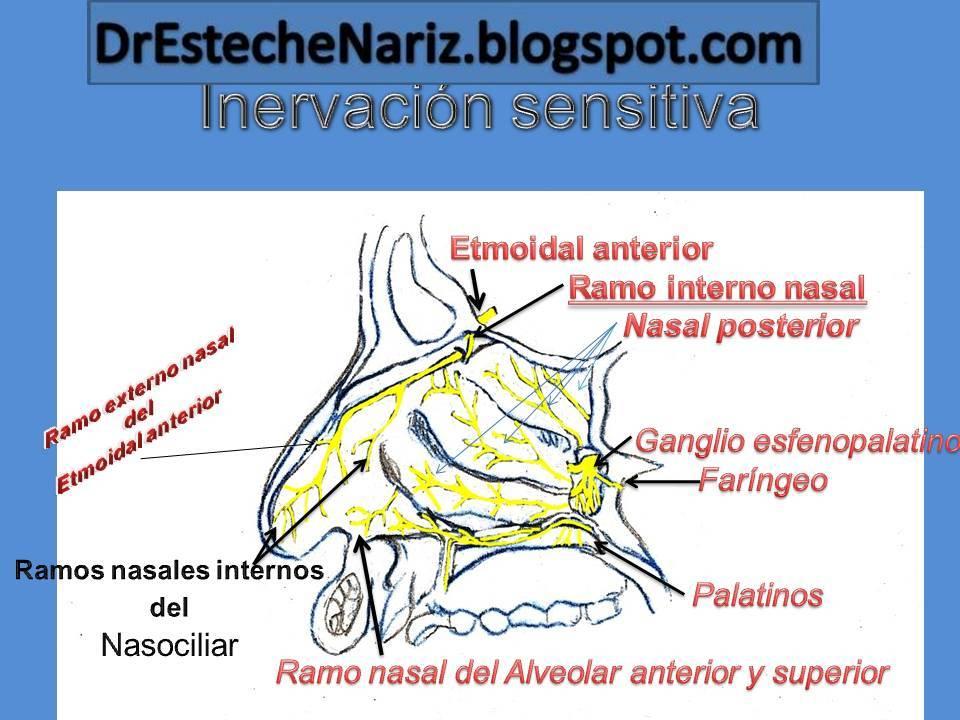 Dr Esteche   Rinoplastia   Cirugía Plástica de Nariz: Rinoplastia ...