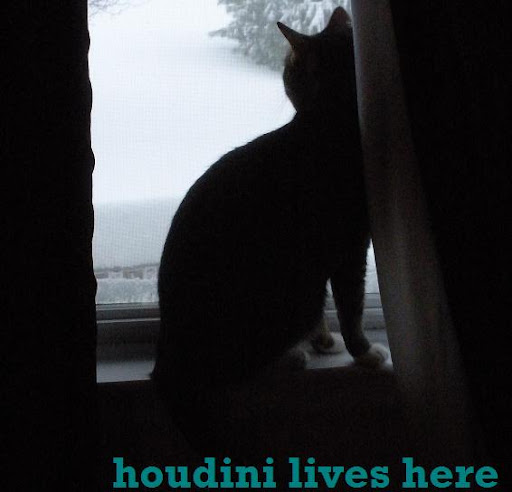 Houdini Lives Here