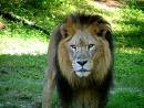 Лъв!!!