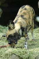 Хиеново куче!!!