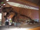 Диметродон Dimetrodon!!!