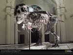 Тиранозавър Tyrannosaurus!!!