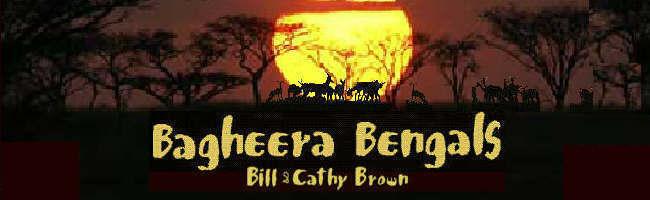 Bagheera's Blog