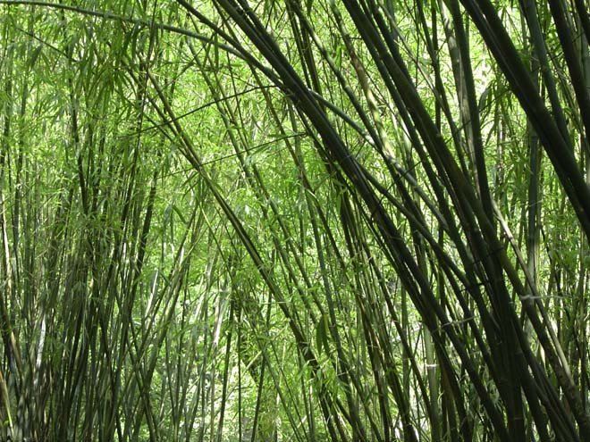 [bambu.htm]