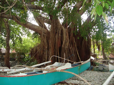 Balete Tree Drawing an Old Balete Tree by The