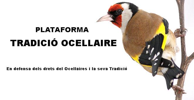 PLATAFORMA TRADICIÓ OCELLAIRE