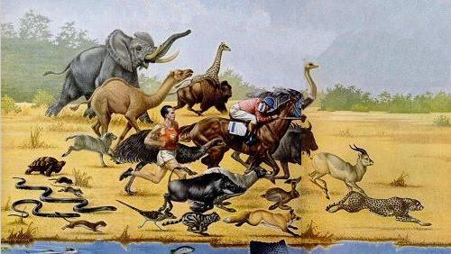 Statpics: Bell-Shaped Animals