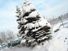 Árvore de neve