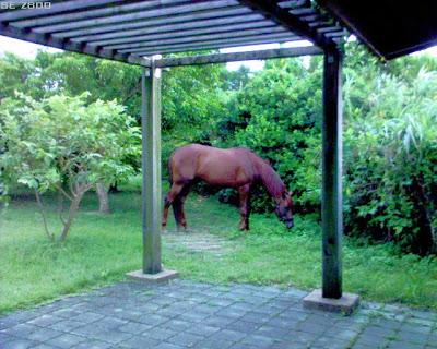 附近馬場的有人跑來遛馬。