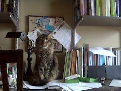 My furbaby, Jua, the paperweight