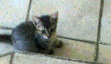 ..:: Cat ::..