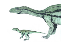 Mussasaurus