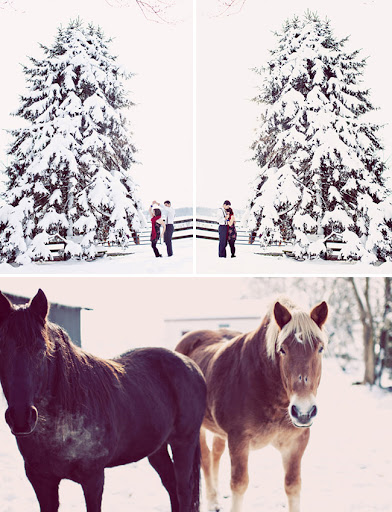winter wedding horses
