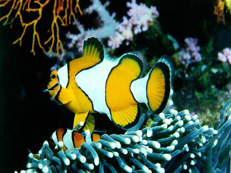http://3.bp.blogspot.com/_q58hc68CJtg/TL2wawAsAuI/AAAAAAAACFw/eXrtbarl7_A/s1600/9551160137705437f1c2820bfce6173e_Free_Fish_Screensaver.jpg