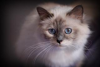 7941 Kittens