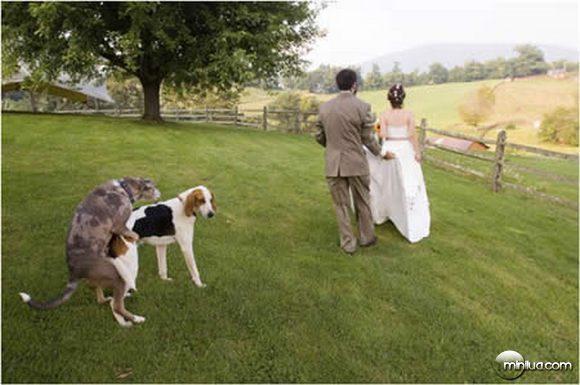 fotografar cachorros transando