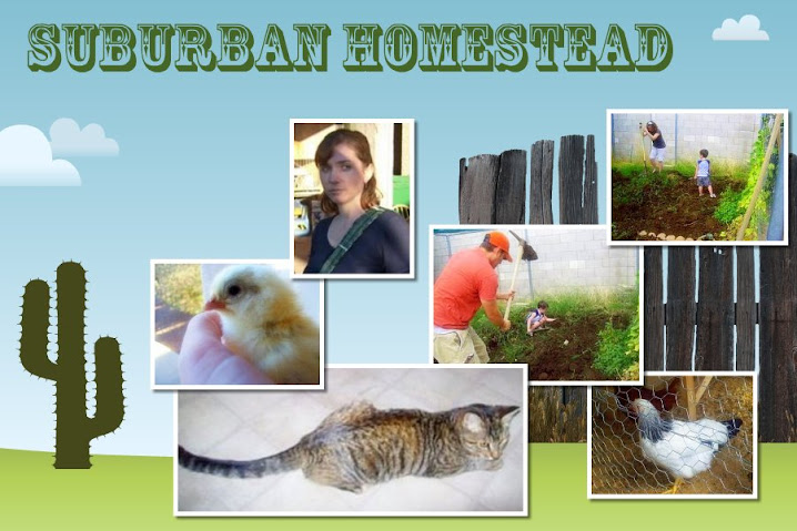 Eloise: The Suburban Homestead