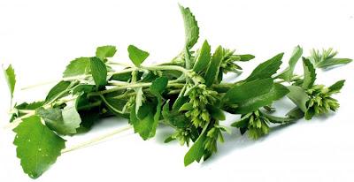 http://3.bp.blogspot.com/_q98bYbvV4X4/Sd-UHG_1vZI/AAAAAAAAGHo/IXZ4F2JD2PM/s400/Stevia-planta-del-sucre-10.jpg