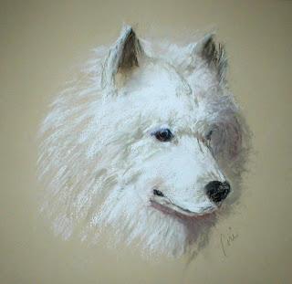 Arctic Serenity - Samoyed By Cori Solomon