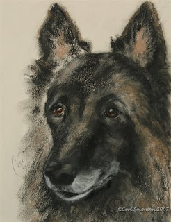 Belgian Tervuren - Peaked Interest by Cori Solomon