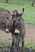 NEW BABY DONKEY BORN!