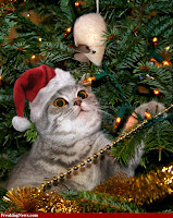 Christmas Cat Wallpapers, Pet Cat Christmas Wallpapers