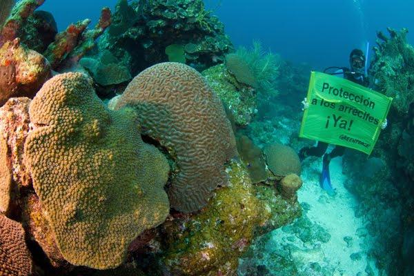 Resultado de imagen para cuidar los arrecifes
